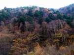 Trees071104