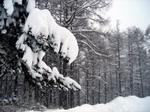 Snow071231