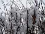Snow080301