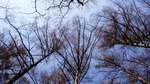 Trees080429