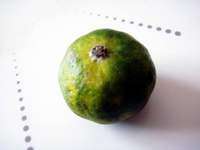 Citrus_depressa081113