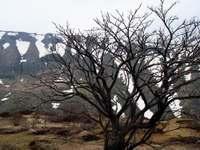 Tree090520