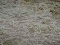Muddy_stream090801
