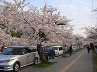 Sakura100419