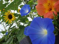 Flower100814