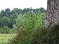 Trees100829