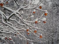 Snow101225