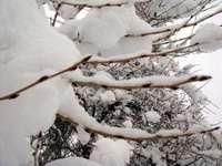Snow110117