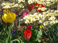 Flower110429a