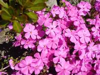 Flower110429b