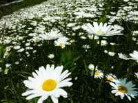 Flower110526