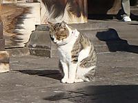 Cat120107b_2