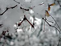 Snow130115