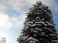 Tree130127