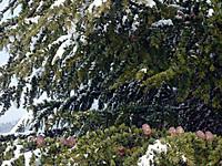 Tree130213