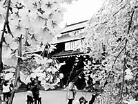 Ueda130406c