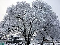 Snow131221