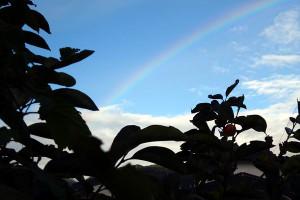 Rainbow181027