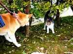 catdog060219a