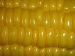 corn050815