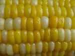 corn050823