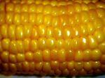 Corn060731jpg