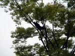 crow050705