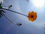 flower050810