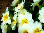 Flower060425