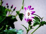 Flower0605013