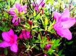 Flower060511