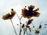 Flower060712