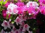 Flower070515