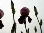 Flower070516
