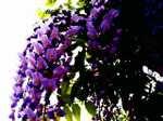 Flowera060512