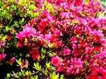 Flowerc060512