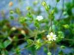Flowers060526