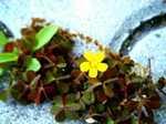 Flowers060526b