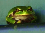 Frog060808