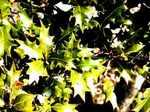 leaf060211