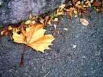 leaf060224