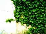 Leaf060518_1