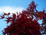 Leaves061113_1