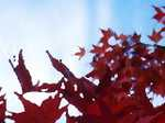 Leaves061113b_3