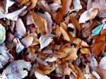 Leaves061205