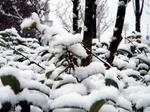 snow051205