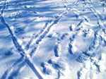 snow060126