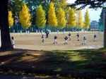 softball051112