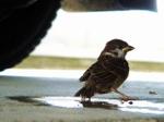 Sparrow060816
