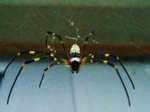 Spider060907